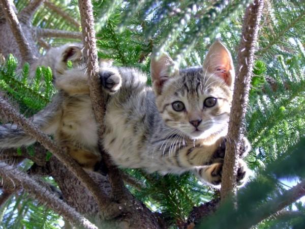 cat,kitten,cute,beautiful