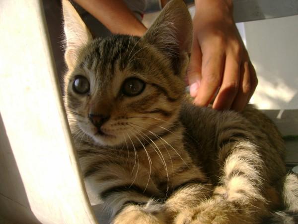 kitten,pets,wild,cat