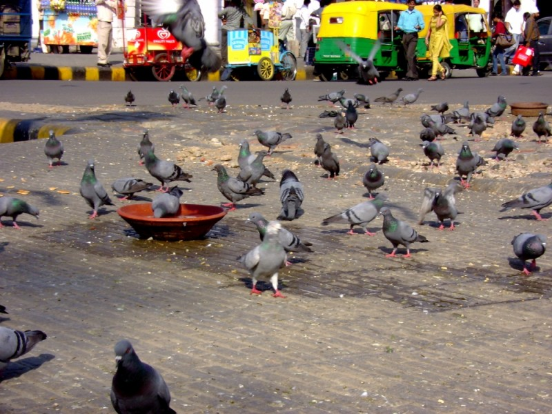 birds,nature,city,Connaught place,delhi