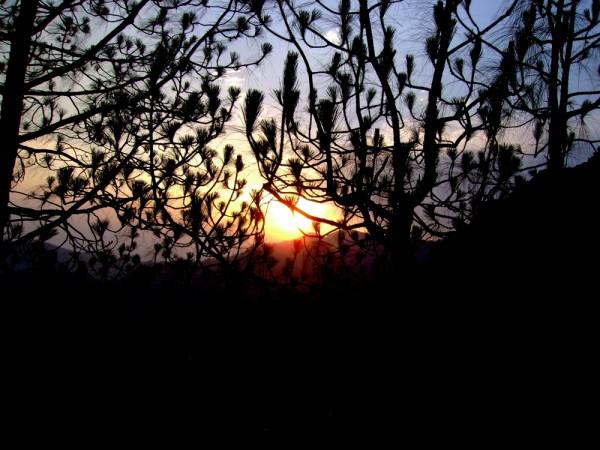 sunset,tree,dusk,hills