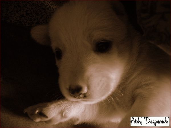 puppy cute,tedy bear,cute