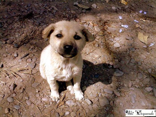 Pup Posing pretty