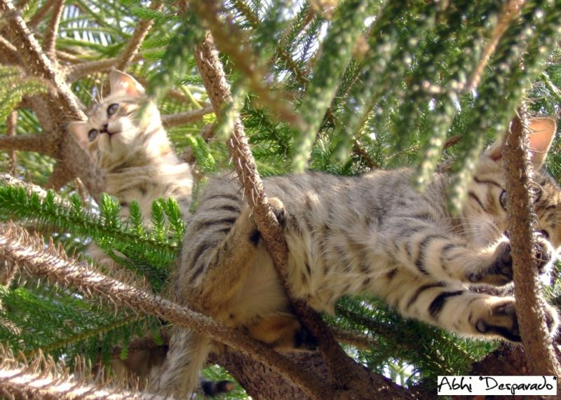 cats playing,kittens on tree, cat on a