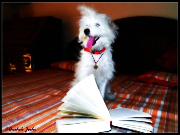 Well read Dog, book reading dog, literate dog