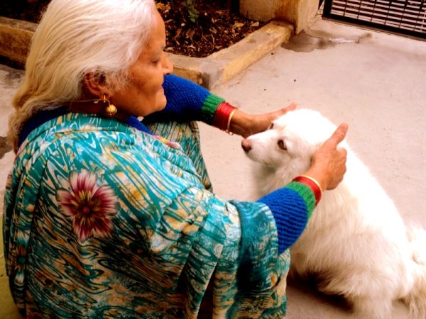 old lady with dog,old friends, friends forever dog