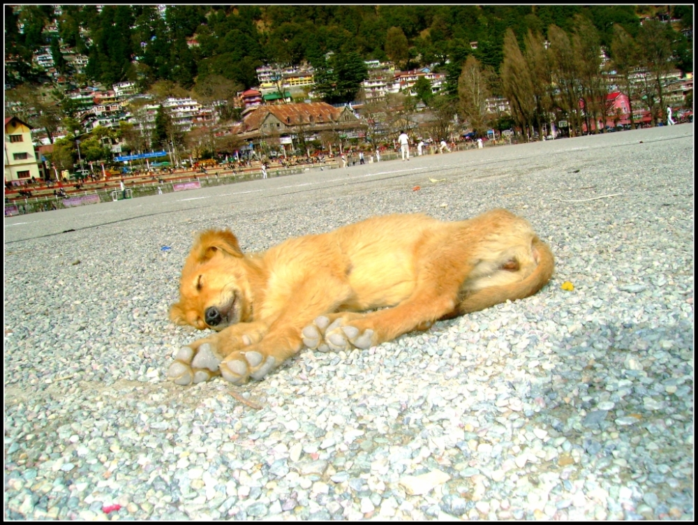 sleeping dog in play field, cute dog sleeping