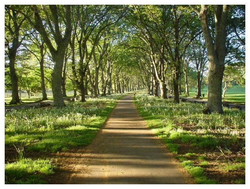 Twin Oak Path