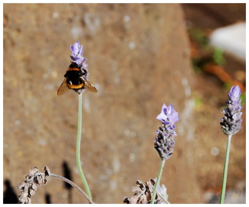 Bee in Jude