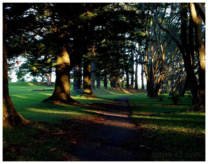 Cornwall park pathway