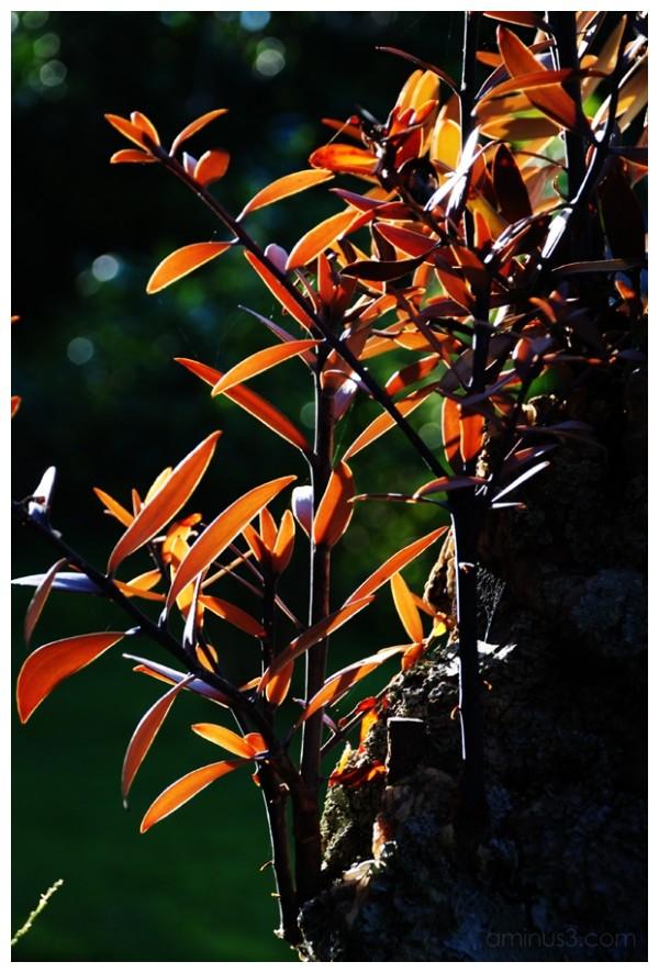 Sunlight on the kauri