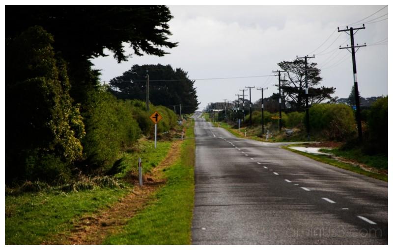 Rush hour in rural Taranaki