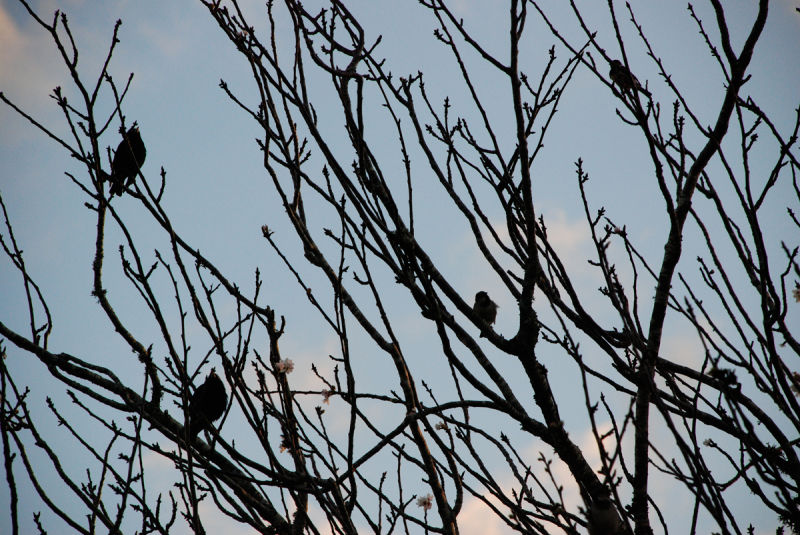 Spring silhouettes