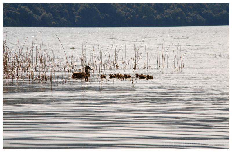 A family swim
