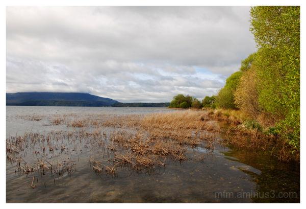 Lake Tarawera III