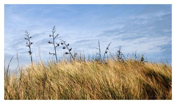 Flax/sky