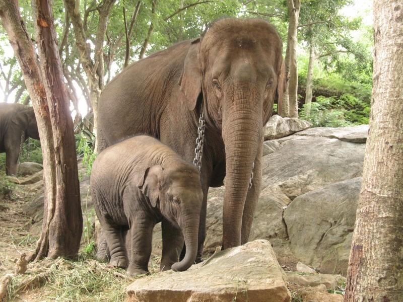 فیلی به همراه مادرش