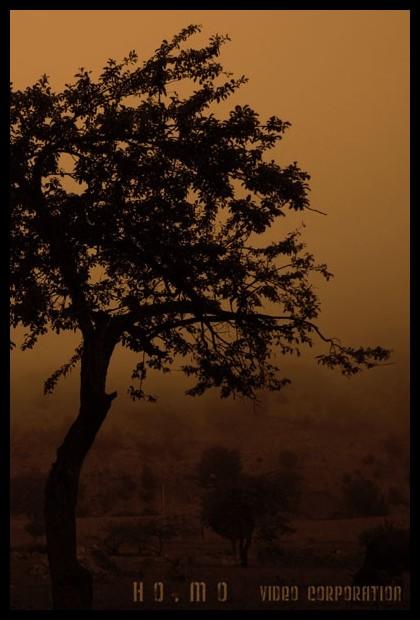 sins tree