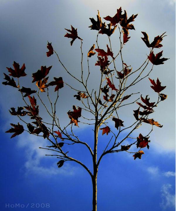 fall -2