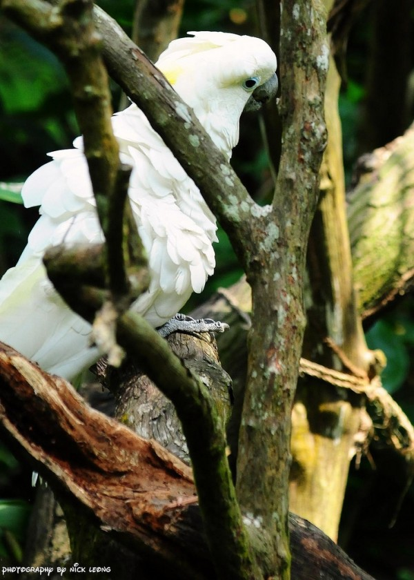 Bird in singapore Zoo