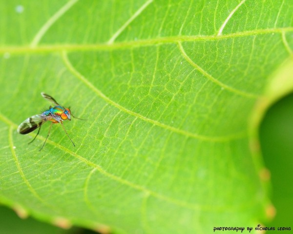 Another fly on a leaf