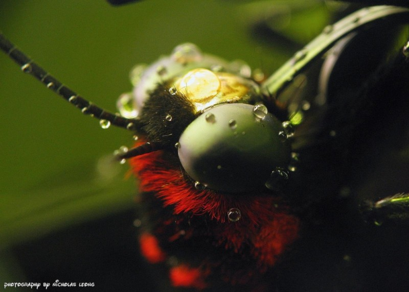 Extreme close-up of butterfly