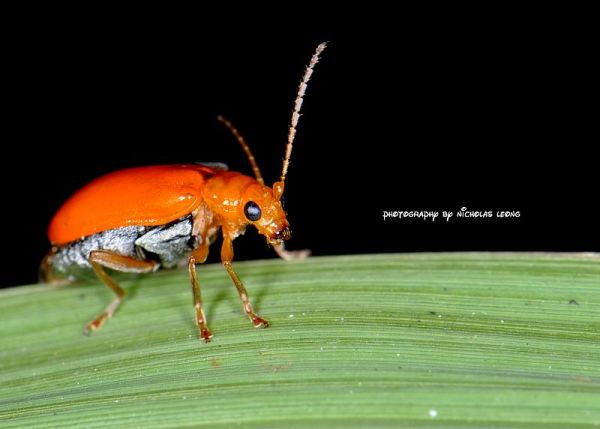 A beetle on a leave