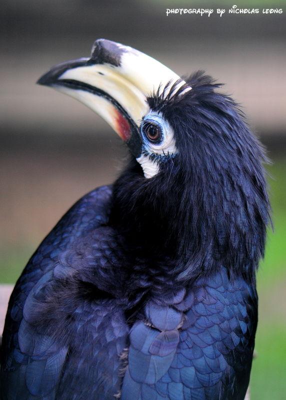 A hornbill
