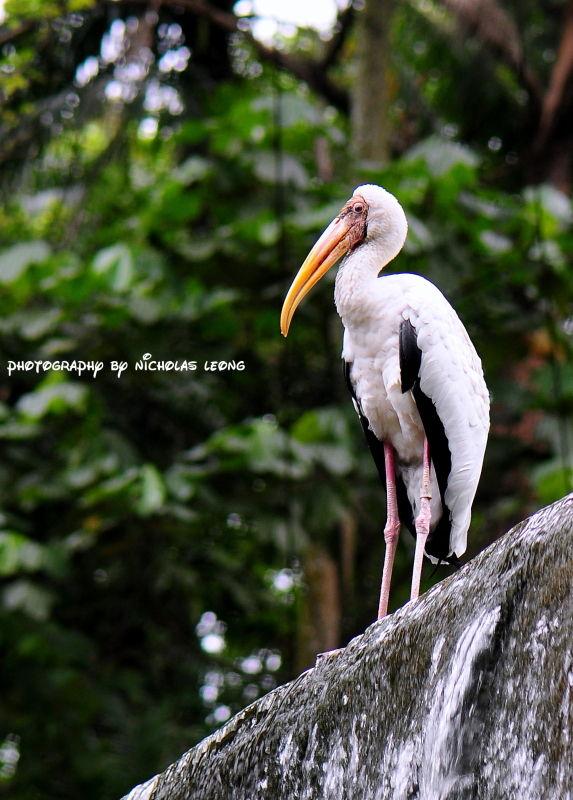 A stork?