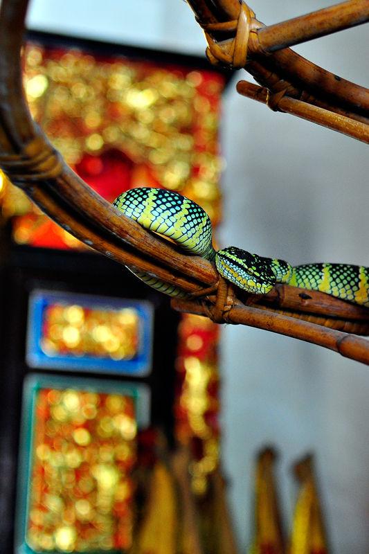 Snake roaming free