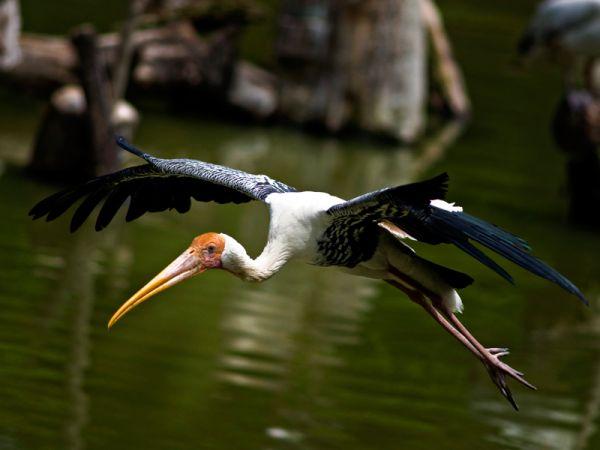 In flight bird
