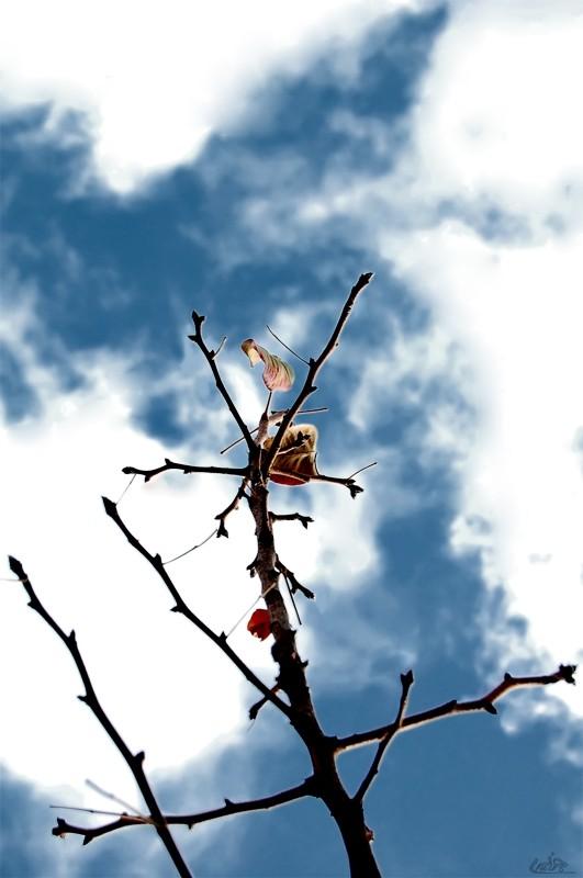 tree in iran