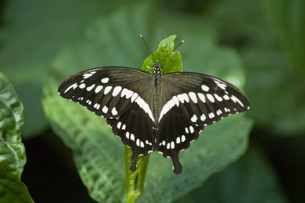 Papillon en liberte