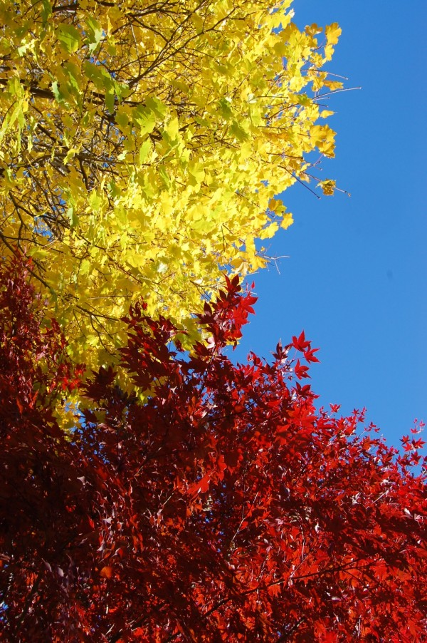 red, yellow and blue