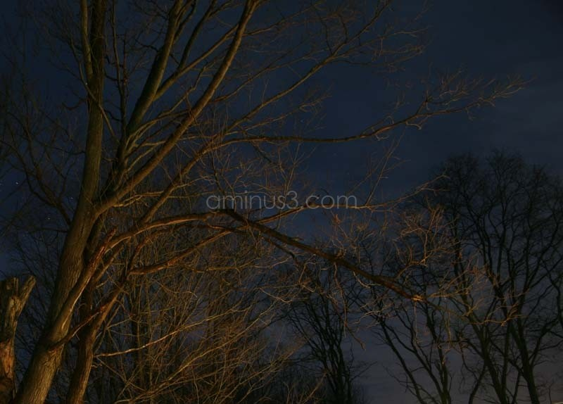 Maple Tree at Night