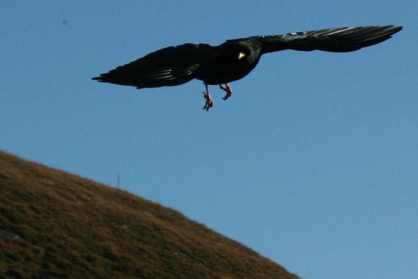 Crow Hunter