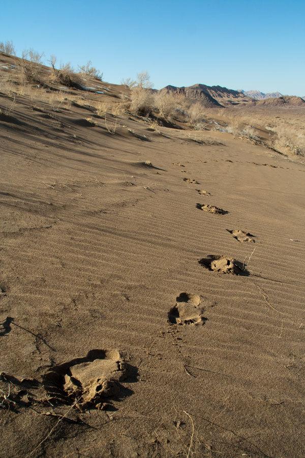 Desert,Foot Print