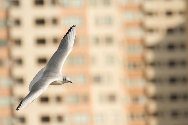Seagull Series at Tehran Lake