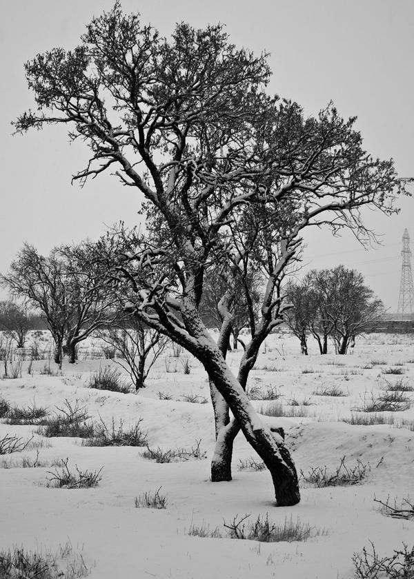 Love , Tree