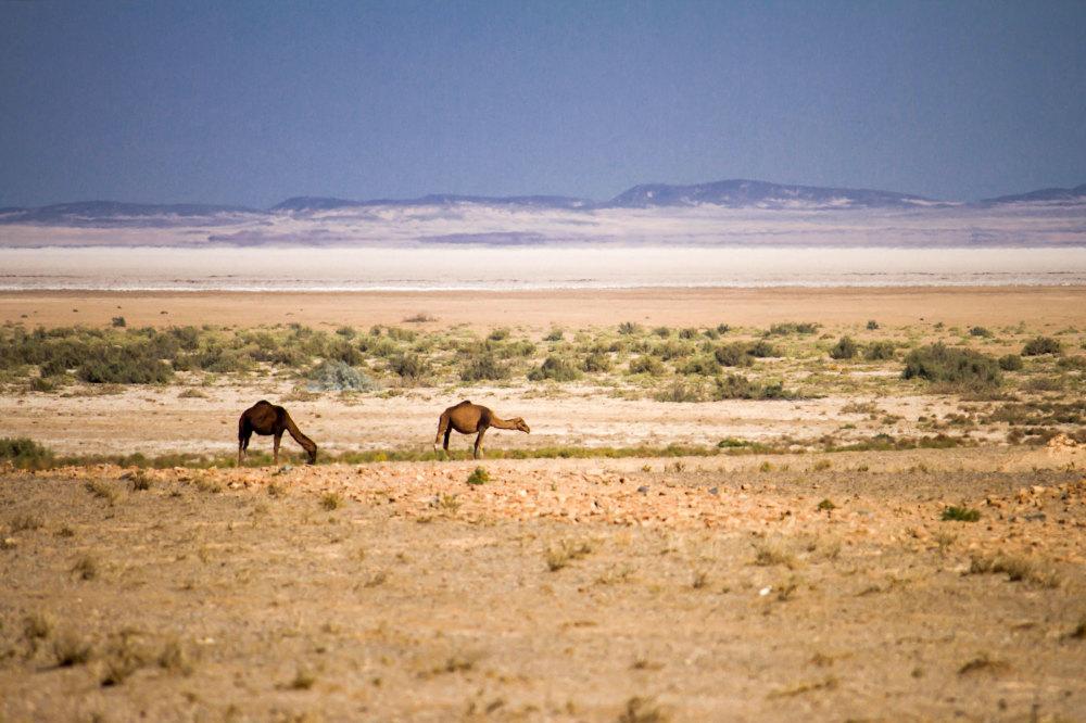 The Maranjab Desert