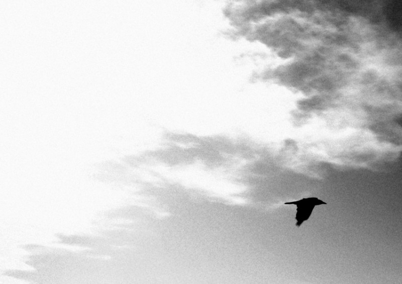 Sky &  The Bird