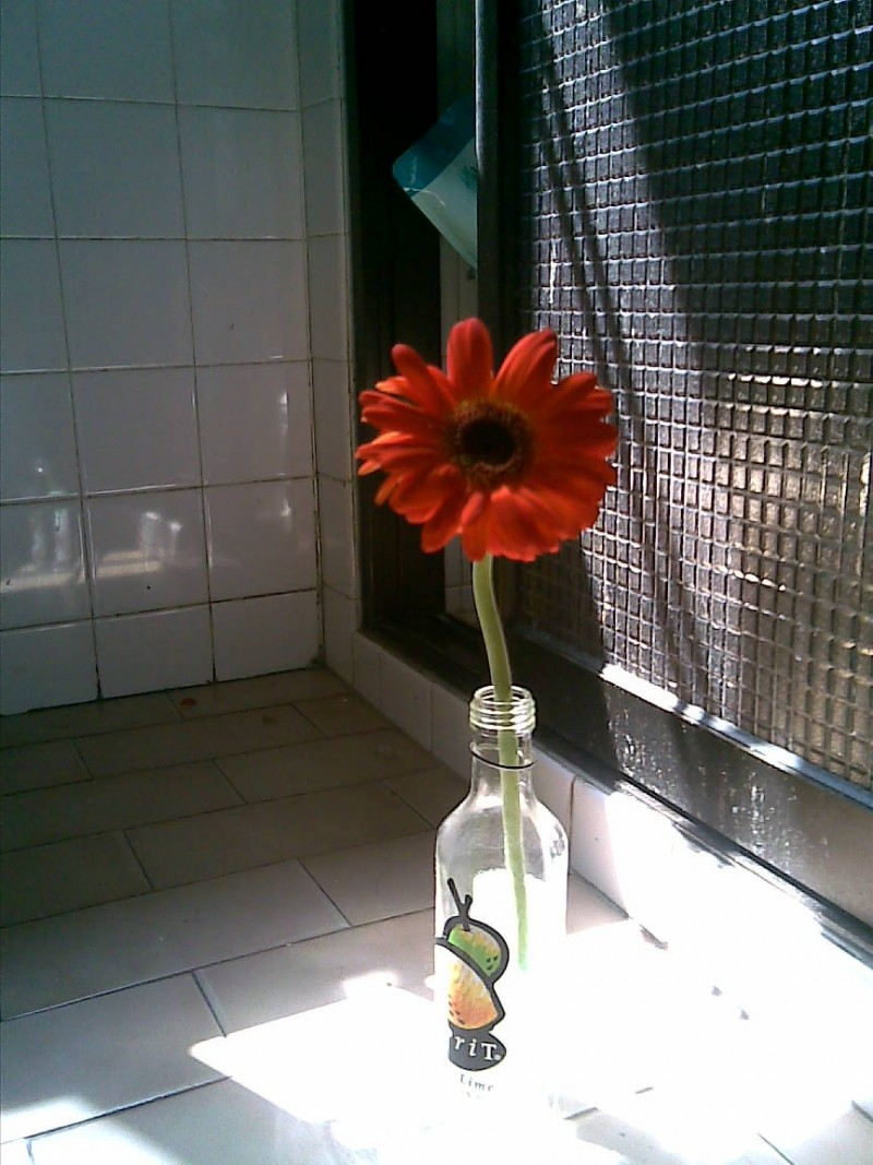 A flower smiles at the sun