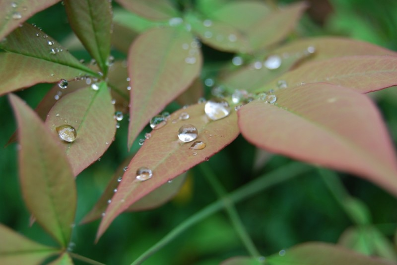 leaf, water droplets