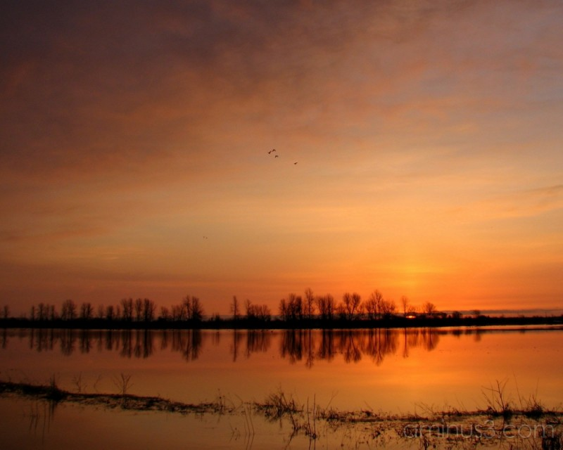 Dawn on the floodplain.