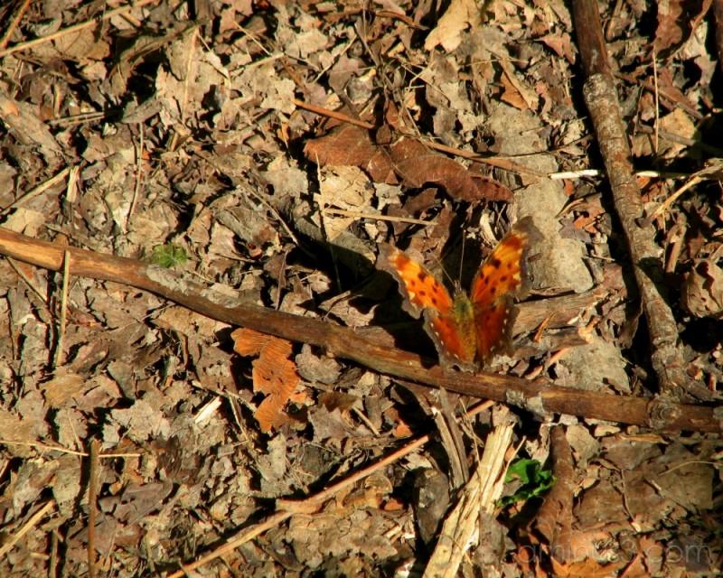 Butterfly resting on stick.