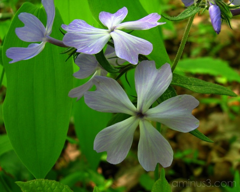 Flowers in the woods.