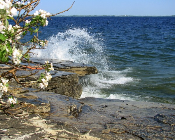 Waves pound the rocks with apple blossoms in view.