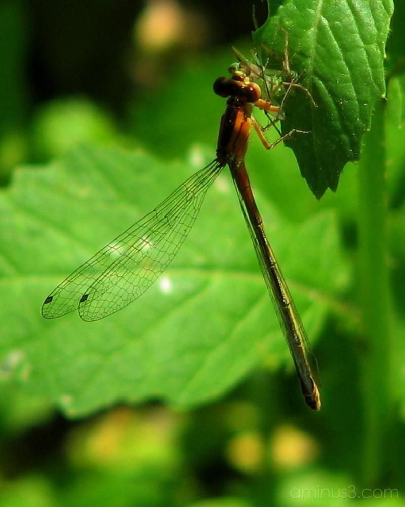 Dragonfly having lunch.