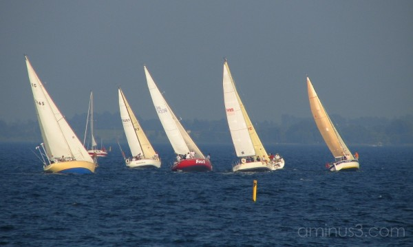 Sailboats prepare for race.