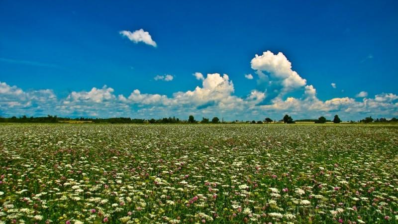 Fallow field on Wolfe Island