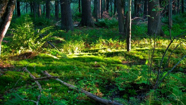 Forest floor lit by sunlight.